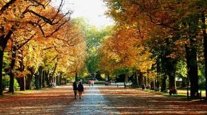 autumn-953973_960_720